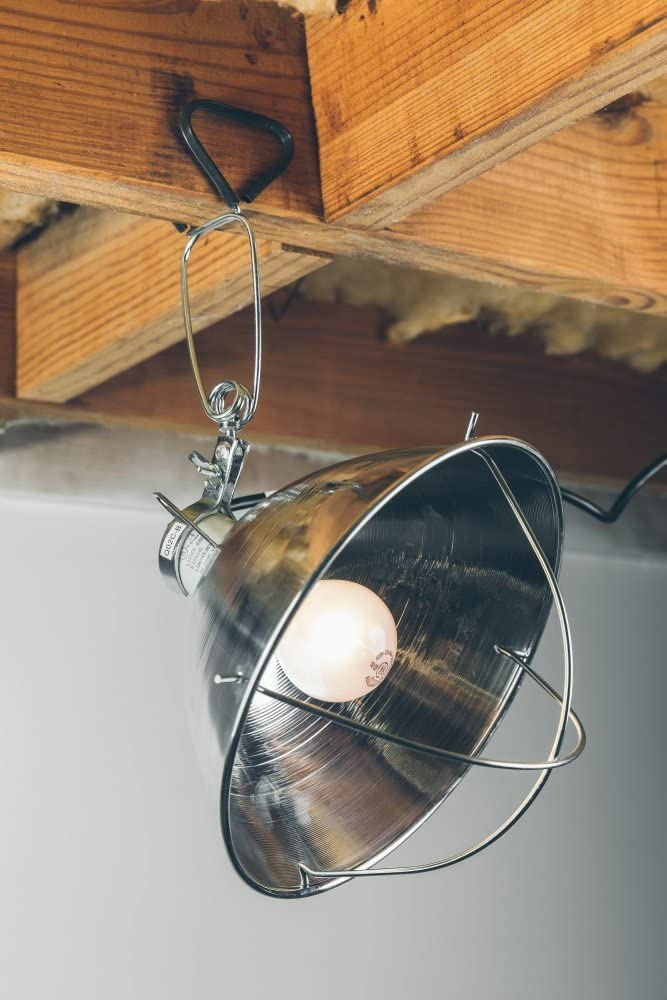 Woods Clamp Lamp